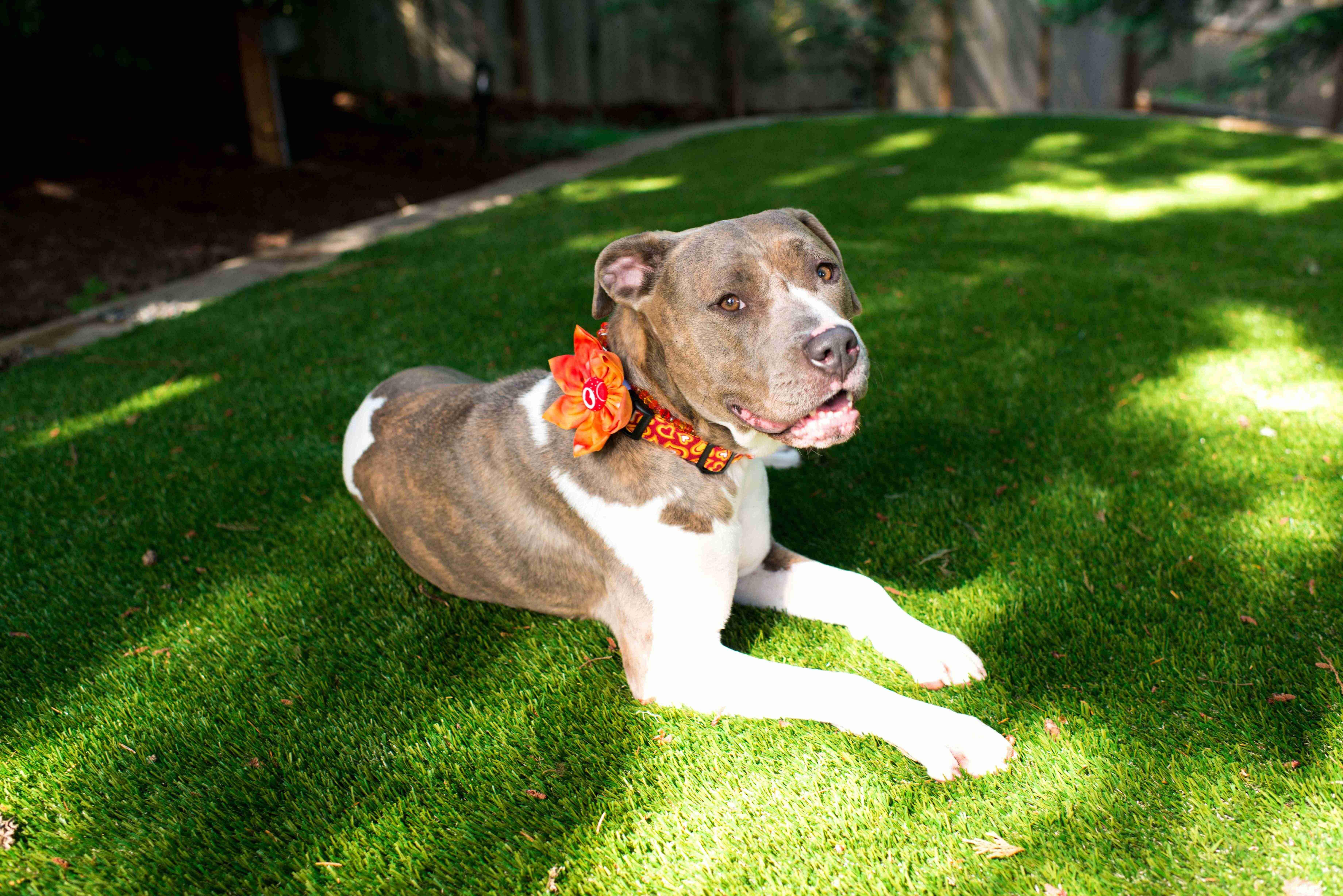 Turf - Gold Coast - Gilston - A dog on Turf