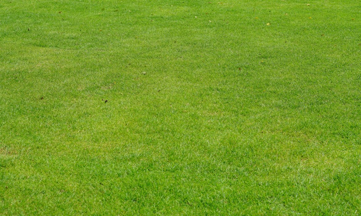 Why have a lawn in your backyard?