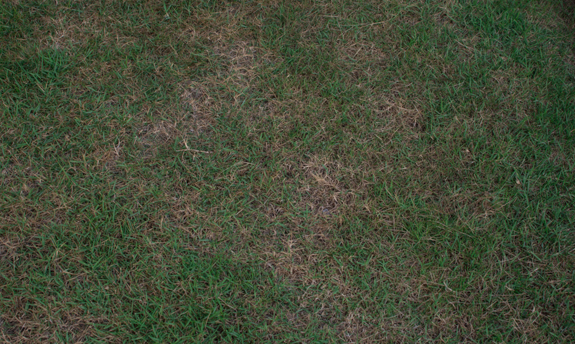 Why is it important to buy turf from somewhere reputable?