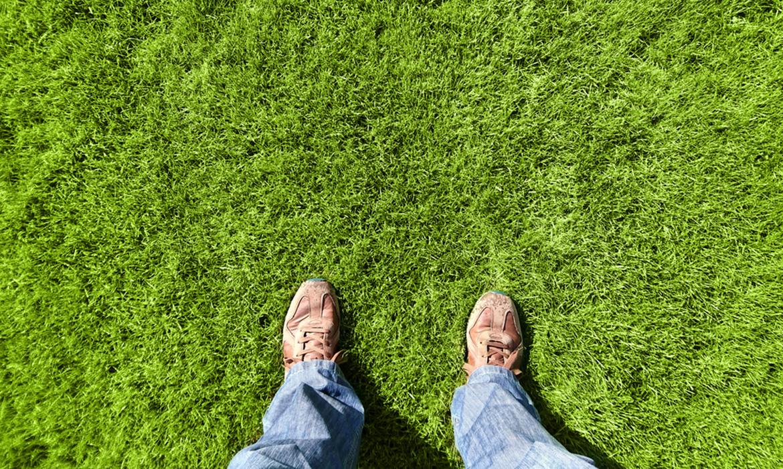 Do I need to fertilise my turf?